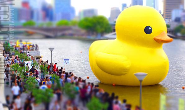 duck15.jpg