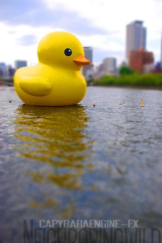 duck16.jpg