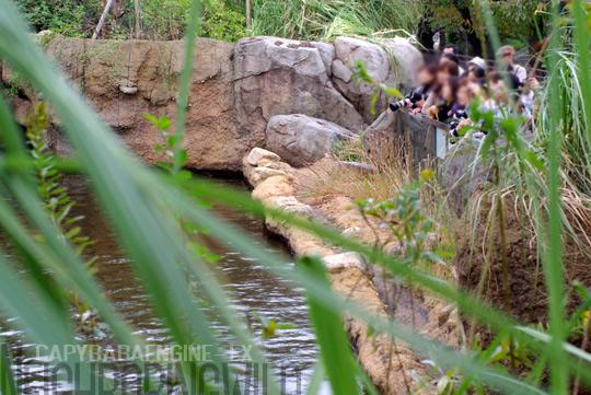 hahaosenaka3.jpg