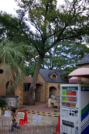 treeslife1.jpg