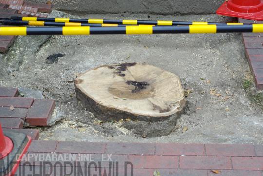 treeslife2.jpg