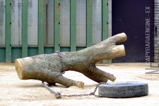 treeslife5.jpg