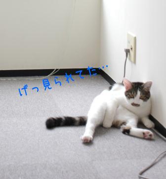 ひげごろう20110728-3
