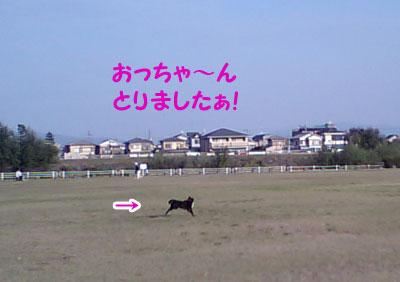 CA350431w4.jpg