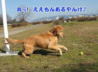 IMG_0589w4.jpg