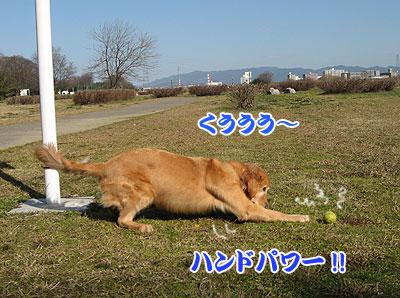 IMG_0590w4.jpg