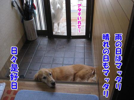 IMG_0603nw45.jpg