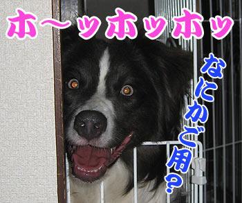 IMG_1041w35.jpg