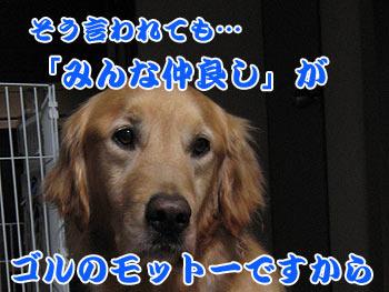 IMG_1045w35.jpg