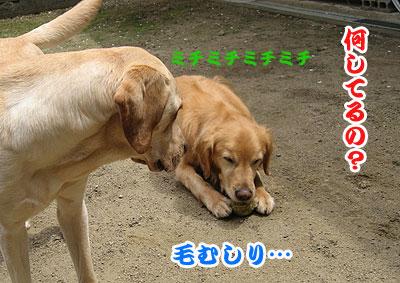 IMG_1046w4.jpg