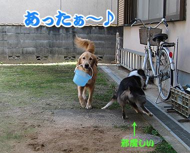 IMG_2360w38.jpg