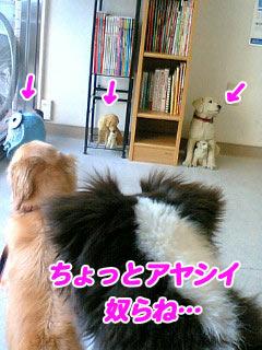 PA0_0009w32.jpg