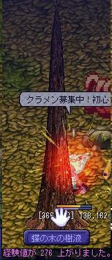 20060307Tyounoki3.jpg