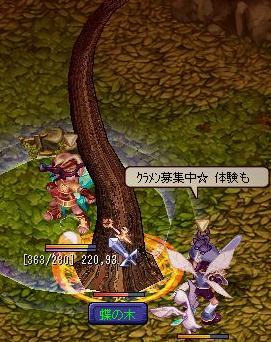20060503_tyounoki.jpg