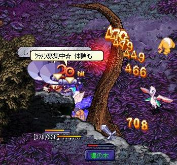 20060505_tyounoki04.jpg