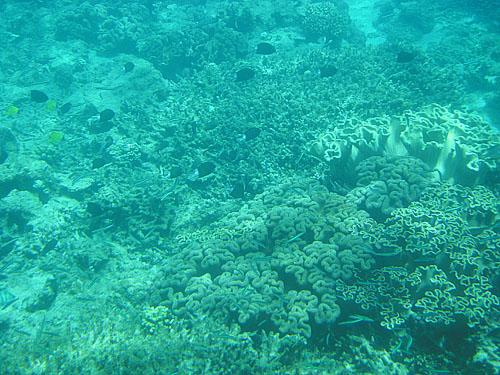 古仁屋生間周辺のサンゴ礁⑤