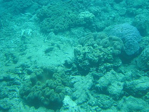古仁屋生間周辺のサンゴ礁④