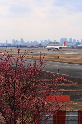 エアフロントオアシスの紅梅with JAL B777-246(by EF100-400)
