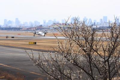 エアフロントオアシスの白梅with JAC DHC8-Q400(by EF100-400)