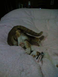 寝転びピッケ3