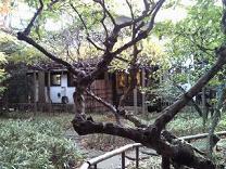 はけの森美術館6