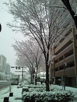 京都の冬2