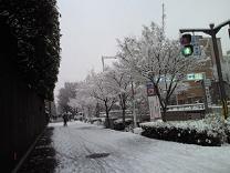 京都の冬3
