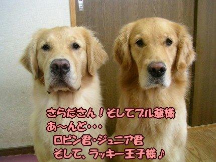 SANY0008_20090930120804.jpg