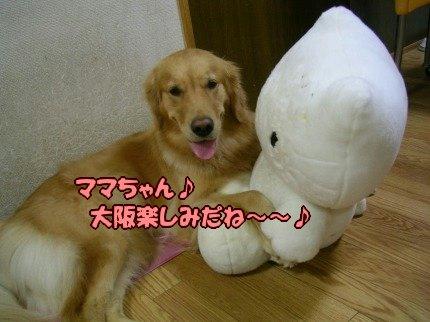 SANY0009_20090919005010.jpg