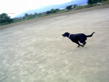 SANY0011_20091022112917.jpg