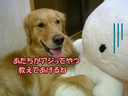 SANY0012_20090919005010.jpg