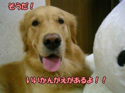 SANY0013_20090919005010.jpg