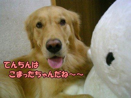 SANY0014_20090919005010.jpg
