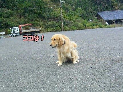 SANY0014_20091020091533.jpg