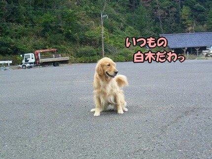 SANY0015_20091020091532.jpg