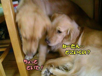 SANY0019_20090913072546.jpg