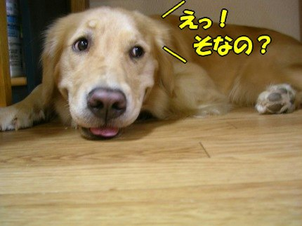 SANY0019_20090919004846.jpg