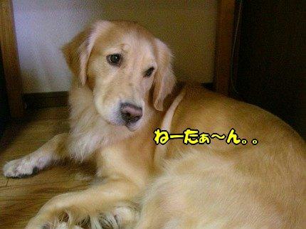 SANY0020_20090913072545.jpg