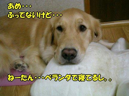 SANY0023_20091006172148.jpg