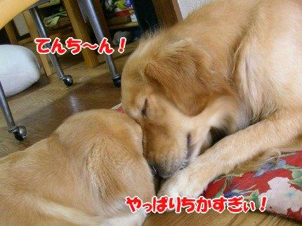 SANY0029_20091008123220.jpg