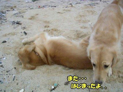 SANY0029_20091020091808.jpg