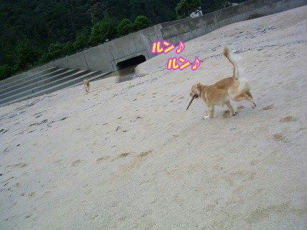 SANY0031_20091020091917.jpg