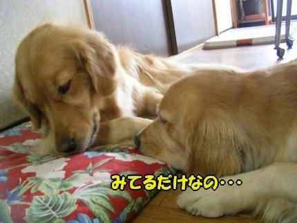 SANY0032_20091008122930.jpg