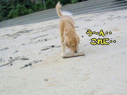 SANY0032_20091020091808.jpg