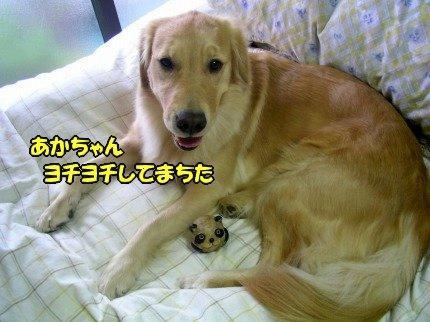 SANY0032_20091111061136.jpg