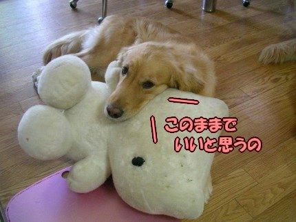 SANY0033_20090914065440.jpg