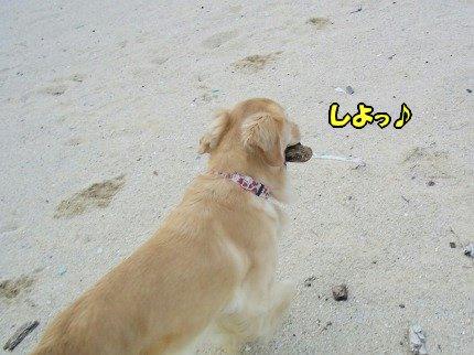 SANY0033_20091020091808.jpg