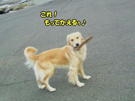 SANY0035_20091020091917.jpg