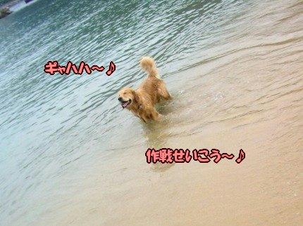 SANY0048_20091027103113.jpg