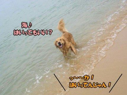 SANY0049_20091027103113.jpg